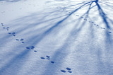 footprint and shadow on snow poster