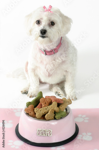 poster of pampered pooch