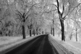black and white winter way poster