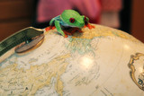 red eye tree frog on earth poster