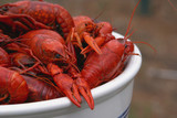 bowl of boiled crawfish from side. poster
