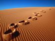 Leinwanddruck Bild footprints going over the sand.