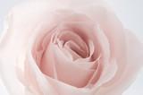 Fototapeta kwitnący - kwiat - Kwiat