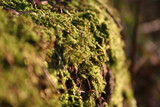 moss on tree poster