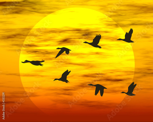 canvas print picture flying ducks