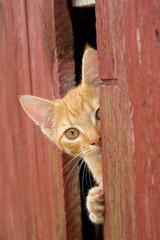 curoius cat