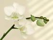 Leinwandbild Motiv orchidee
