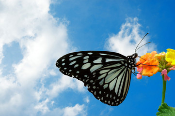 puffy clouds and a butterfly