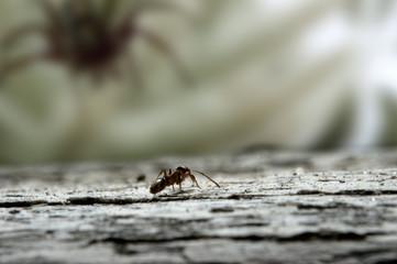 ant in danger