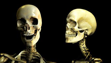 bone conversation