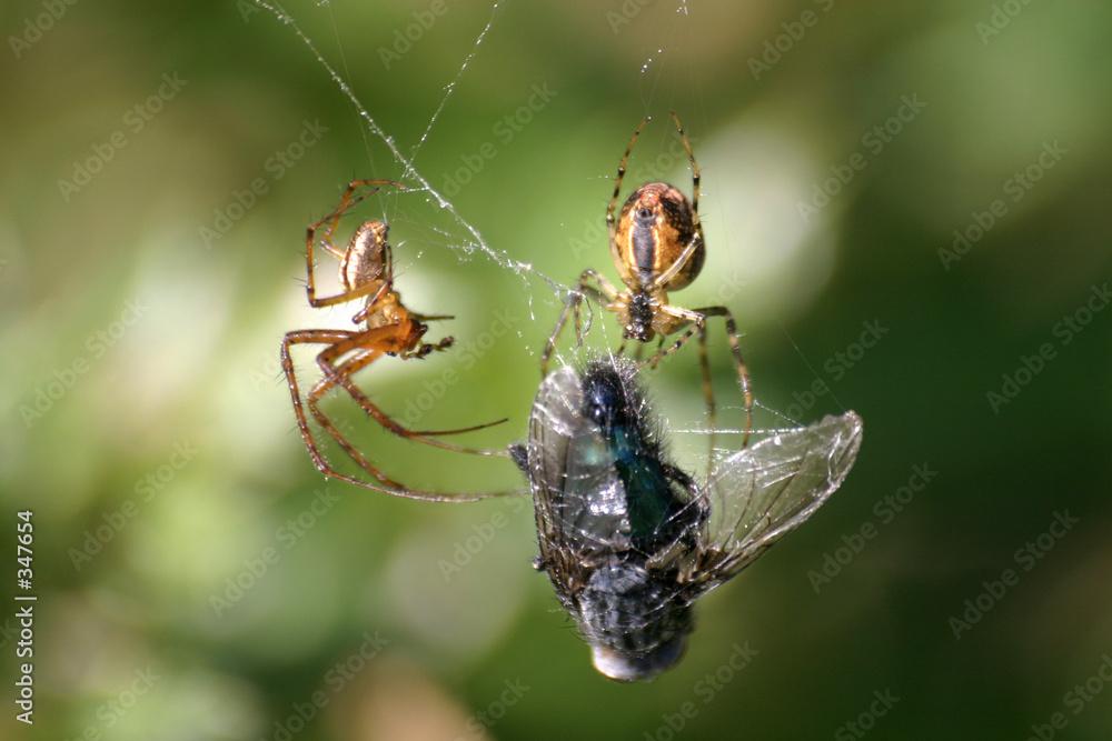 pajęczyna zdobycz strach - powiększenie