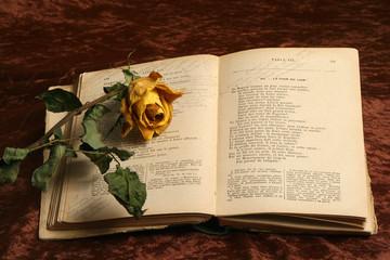 le livre à la rose