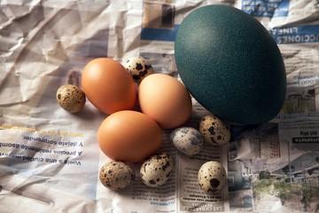 egg5764