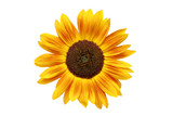 sunflower rusted poster