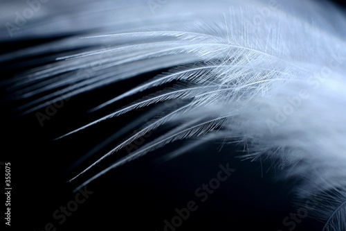 white feather 3