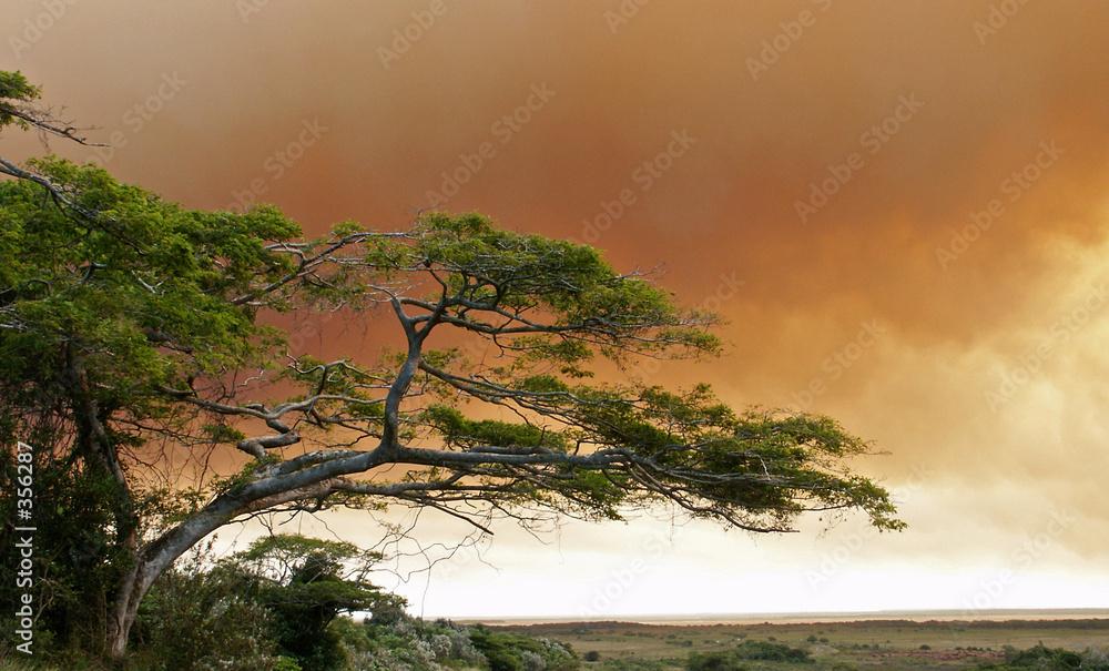 ogień drzewa niebo - powiększenie