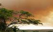 buschfeuer in südafrika - 356287