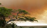 buschfeuer in südafrika