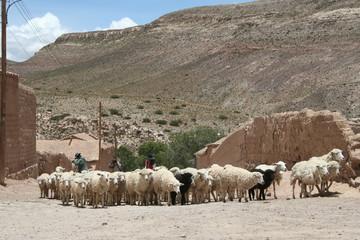 argentina - norte argentino