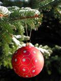 red christmas ball on fir tree poster