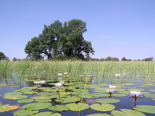 at peace in the okavango delta