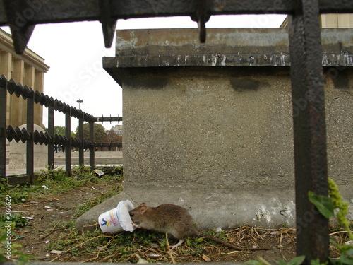 le repas du rat au trocadero
