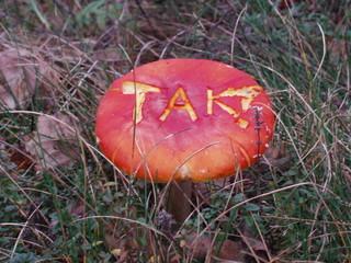 tak(yes) - mushroom