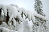 snowy tree branch poster