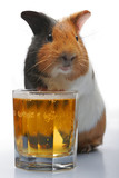 guinea-pig and beer poster