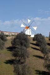 oliviers et moulin