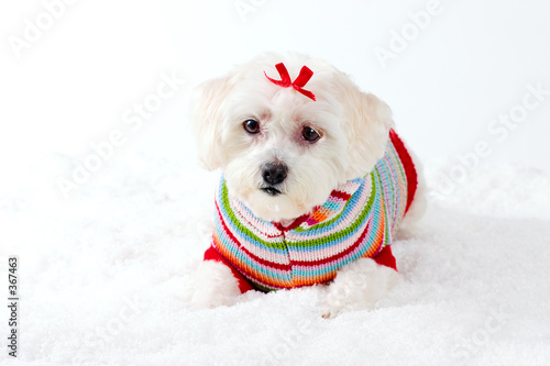poster of small white dog in winter scene