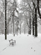 empty bench in the park in winter