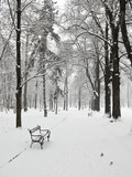 empty bench in the park in winter poster