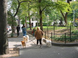 new york dog walkers washington square poster
