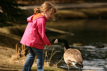 little girl and goose biting
