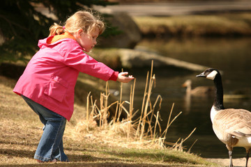 little girl with goose