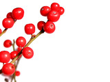 red christmas berries on white poster