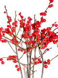 red christmas berries on white 5 poster
