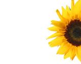 sunflower half poster