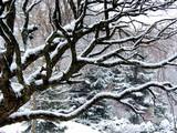 snowfall and tree poster