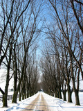 winter tree lined lane 1 poster