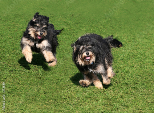 poster of two happy dogs
