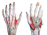 2 hands for medical study poster