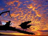 black bird against the sunset poster