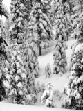 trees covered with snow poster