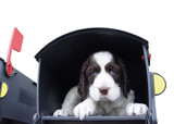 cute puppy in the mailbox poster