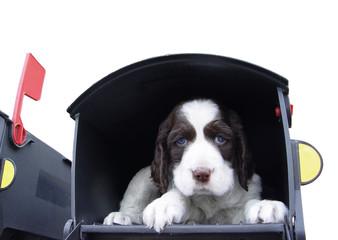 cute puppy in the mailbox