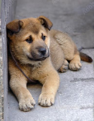 poster of sad dog left alone