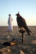 arabian falcon
