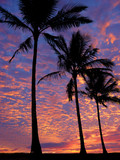 3 palm trees on the beach at sunset poster